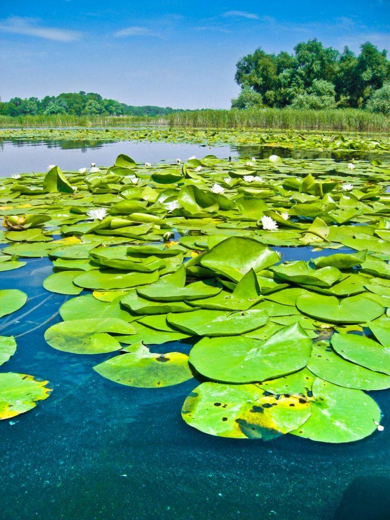 озеро Белая лилия