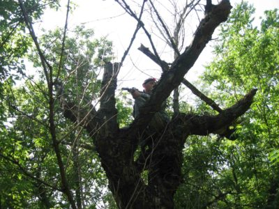 лазертаг на дереве
